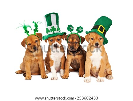 Adorable eight week old mixed Shepherd breed puppy dogs wearing St Patrick's Day hats - stock photo