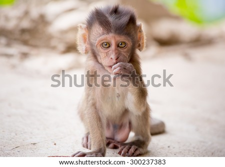Adorable face of baby asian monkey - stock photo