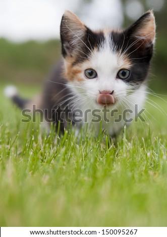 adorable kitten - stock photo