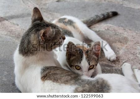 Adorable kitten drinking milk from mom's milk on a stone floor - stock photo