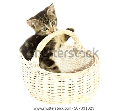 Adorable kitten in white wooden basket isolated over white - stock photo