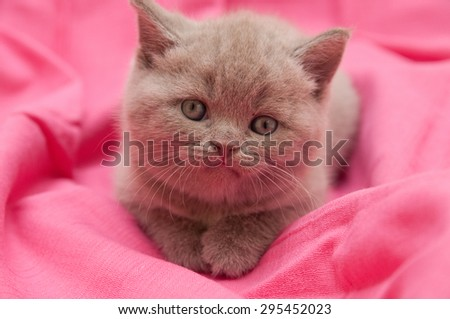Adorable kitten on pink blanket - stock photo