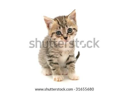 Adorable kitten on white background - stock photo