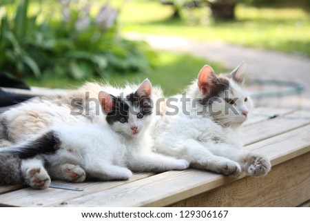 Adorable kitten resting with his mother in the garden - stock photo