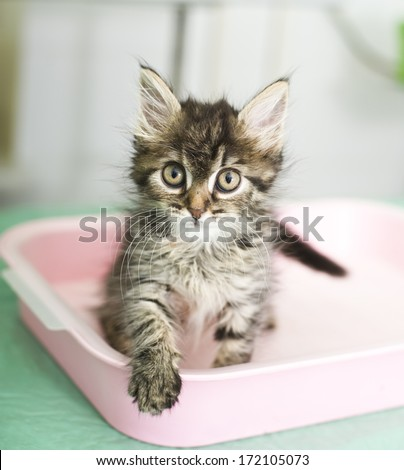 Adorable kitten sitting in cat toilet - stock photo