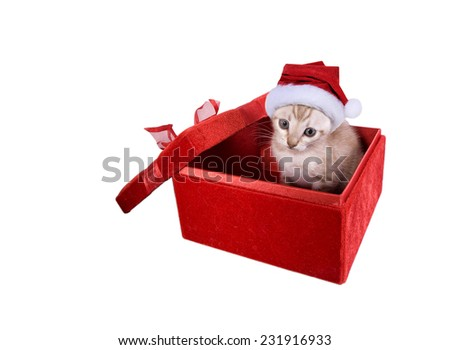 Adorable kitten wearing santa hat in red velvet gift box on white background - stock photo