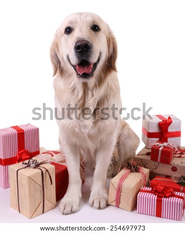 Adorable Labrador sitting with present boxes, isolated on white - stock photo