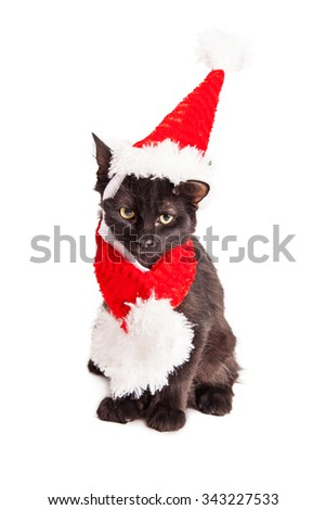 Adorable little black kitten wearing a red Christmas Santa Claus hat and scarf - stock photo