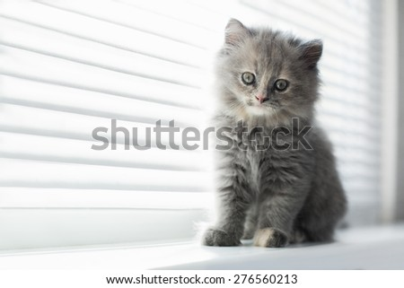 Adorable little cat looking through the window, close up portrait - stock photo