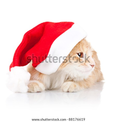 adorable little cat wearing a santa hat and looking to a side over white background - stock photo