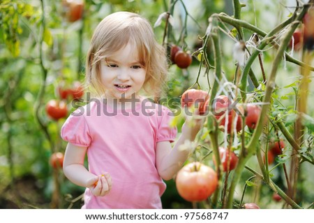 Adorable little girl picking tomatoes in a garden - stock photo