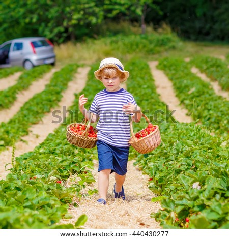 Adorable little kid boy picking and eating strawberries on organic bio berry farm in summer, child on warm sunny day. Harvest fields in Germany. Healthy food for children. - stock photo