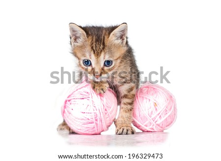 Adorable little kitten with ball of yarn - stock photo