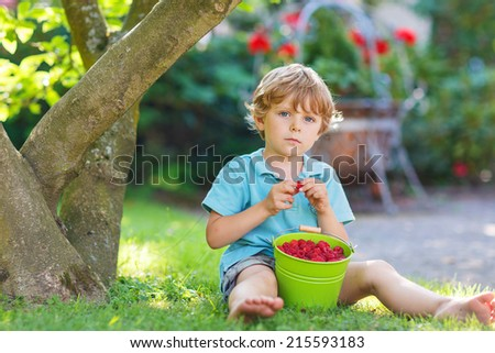 Adorable little preschool child eating raspberries in home's garden, outdoors. Sitting on ground with big buckets with berries. - stock photo