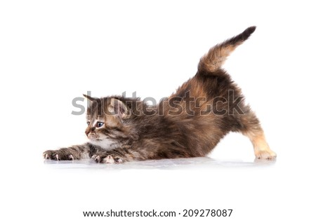 Adorable little tabby kitten - stock photo