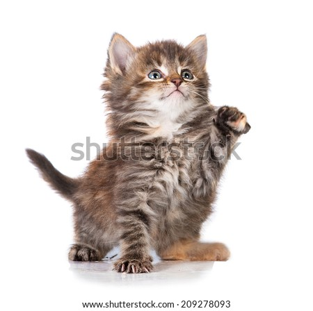 Adorable little tabby kitten with a raised paw - stock photo