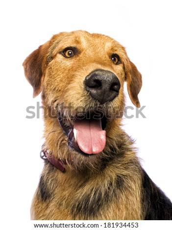 Adorable mixed breed dog isolated on white background - stock photo