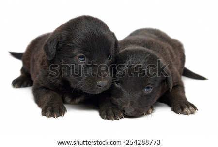 Adorable  mutt puppy dogs isolated on white background. - stock photo