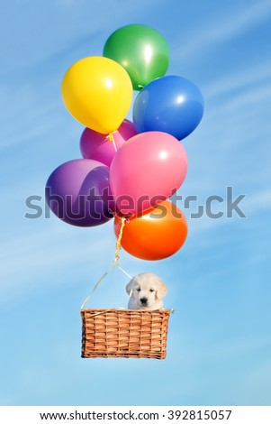 adorable puppy flying with air balloons - stock photo