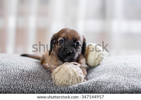 Adorable puppy lying on the sofa and looking at the camera - stock photo