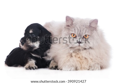 adorable puppy with a cat - stock photo