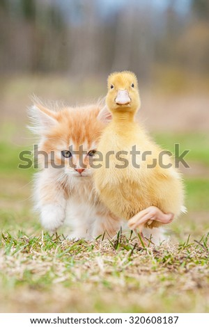 Adorable red kitten with little duckling  - stock photo