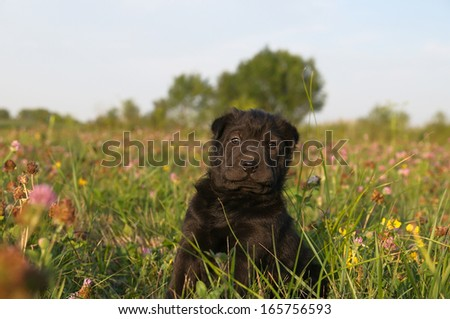 Adorable sharpei puppy lying in the garden - stock photo