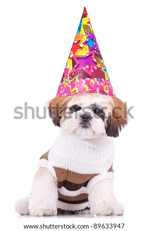 adorable shih tzu puppy wearing a party hat on white background - stock photo