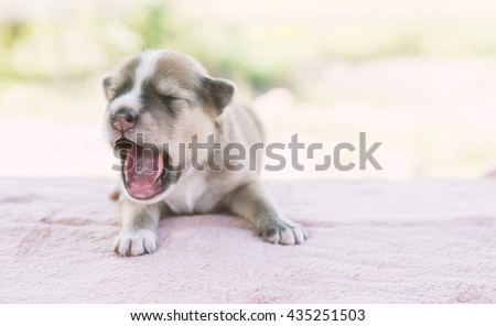 Adorable Small Puppy Relaxing. - stock photo