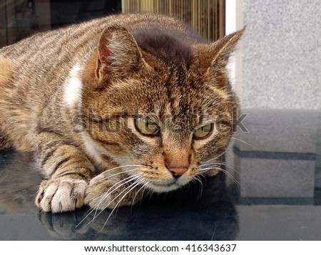 Adorable stray tabby cat lying on the roof of a car - stock photo