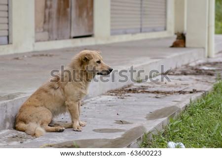 adorable street dog - stock photo