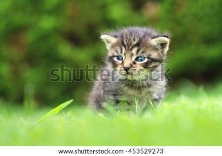 Adorable tabby kitty - stock photo
