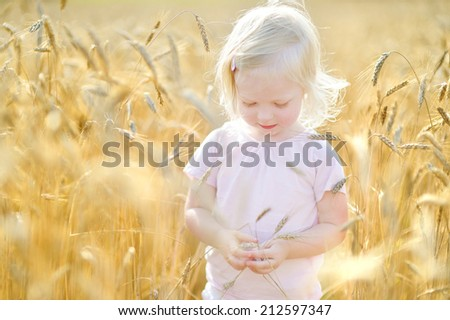 Adorable toddler girl walking happily in wheat field on warm and sunny summer day - stock photo