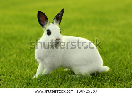 Adorable White Bunny Rabbit Outdoors in Grass - stock photo