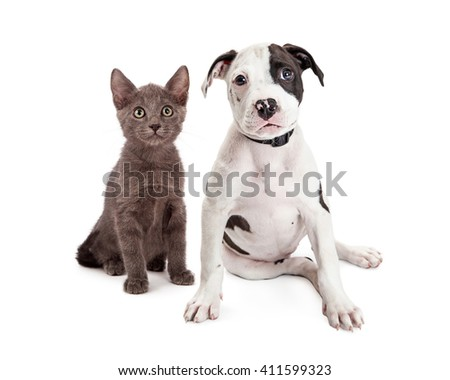 Adorable young kitten and terrier puppy sitting together on white background - stock photo