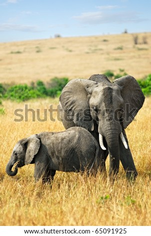 Adult African elephants with baby in the savannah - stock photo