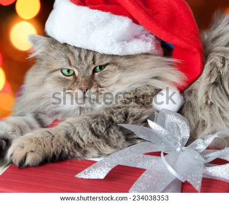 Adult and serious Christmas cat with green eyes  in red Santa Claus cap  - stock photo