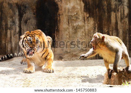 Adult bengal tiger spotted - stock photo