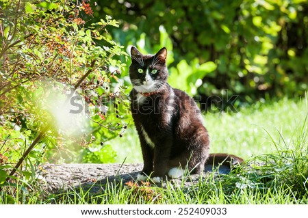 Adult black and white cat sitting on the stone - stock photo