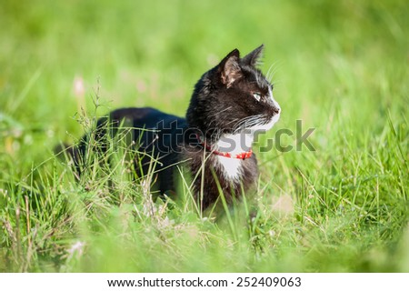 Adult black and white cat walking outdoors in summer - stock photo