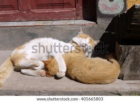Adult Cat and Orange Kitten Hugging Each Other While Basking in Warm Sunlight on Door Step of Home in Copacabana, Bolivia - stock photo