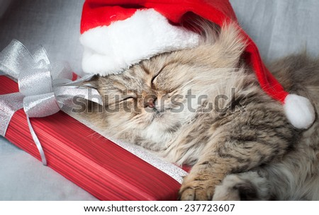 Adult  Christmas cat sleeps in red Santa Claus cap - stock photo
