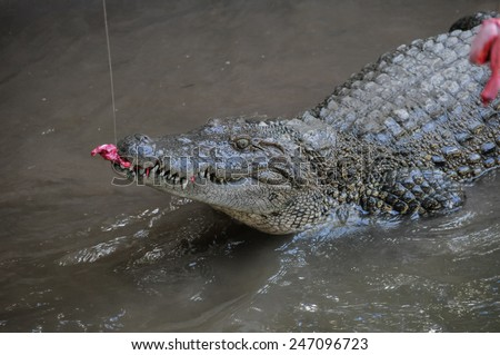 Adult Dangerous Crocodile in a Green Water River - stock photo
