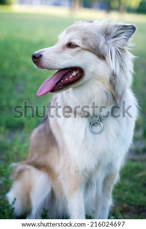 adult dog sitting on the grass in the park - stock photo