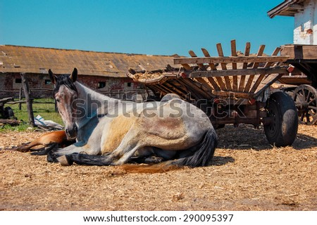 adult horse mare white and her brown foal is lying near a wooden cart on a sunny day - stock photo