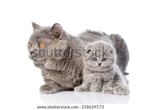 adult mother cat hugging a newborn kitten. isolated on white background - stock photo