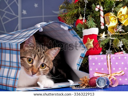 Adult tabby near Christmas spruce with gifts and toys over blue background - stock photo