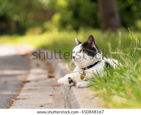 Adult white and black cat lying in the street on the roadside - stock photo