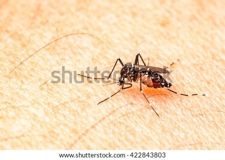 Aedes mosquito bite on skin. Mosquito is carrier of Malaria, Encephalitis, Dengue, Nipa and Zika virus. - stock photo