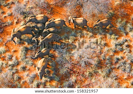 Aerial photo of elephant family - stock photo